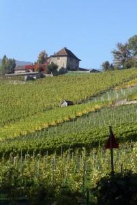 groupement foncier viticole